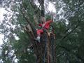 Удаление аварийного дерева в ЦПКиО (парке Горького)
