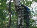 Удаление деревьев по частям со сбрасывание