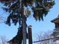 Удаление елки в Cнегирях