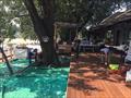 Удаление тополя в кафе в парке Горького